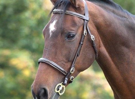In Hand Bridles and Accessories