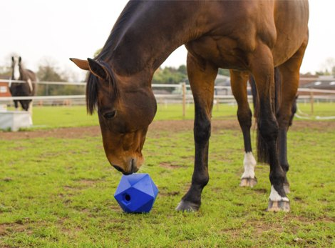Horse Toys and Treats
