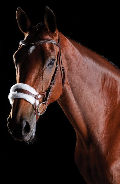 NEW!! Collegiate ComfiTec Bridles