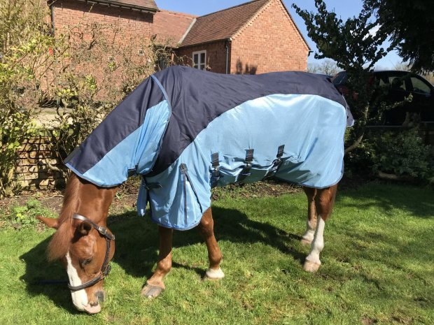 Fly rugs and fly masks.. Ready for the summer heat!